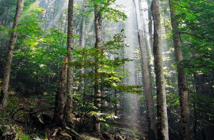 Biogradska Gora National Park Tour